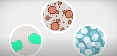 Graphics of bacteria and viruses.