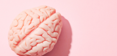 Stock photo of a brain.